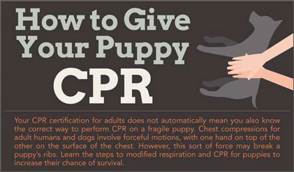 dog cat puppy animal pet cpr